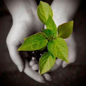 Developing spiritual gifts
